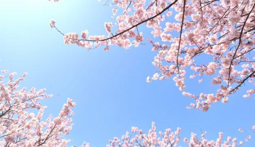 長崎の桜の満開予想2019!散るまでの期間はどのくらい?